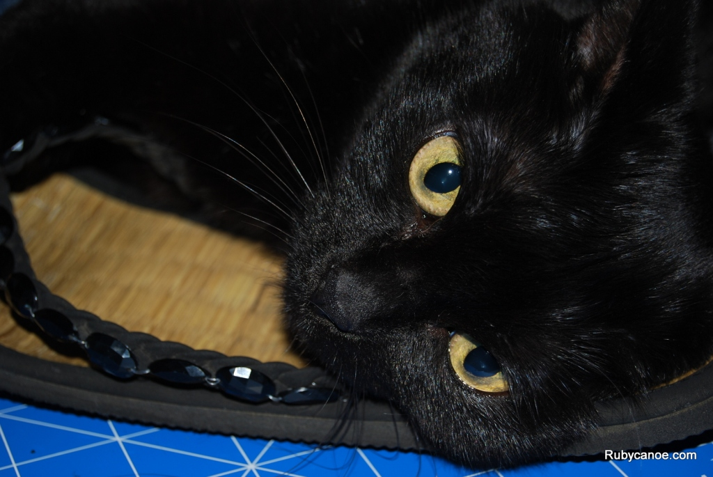 Maaty Cat
