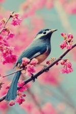 Little birdie in a pink tree.
