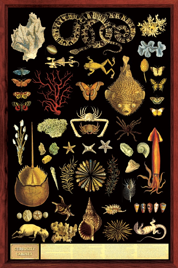 This illustration reminded me of a collection of stuff a sea captain would find behind his lounge...I don't know why...don't ask silly questions.