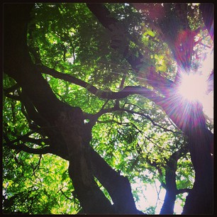 under the tree 26.04.13