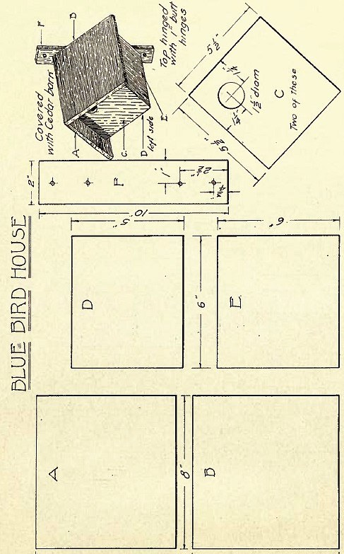 little bird house plans